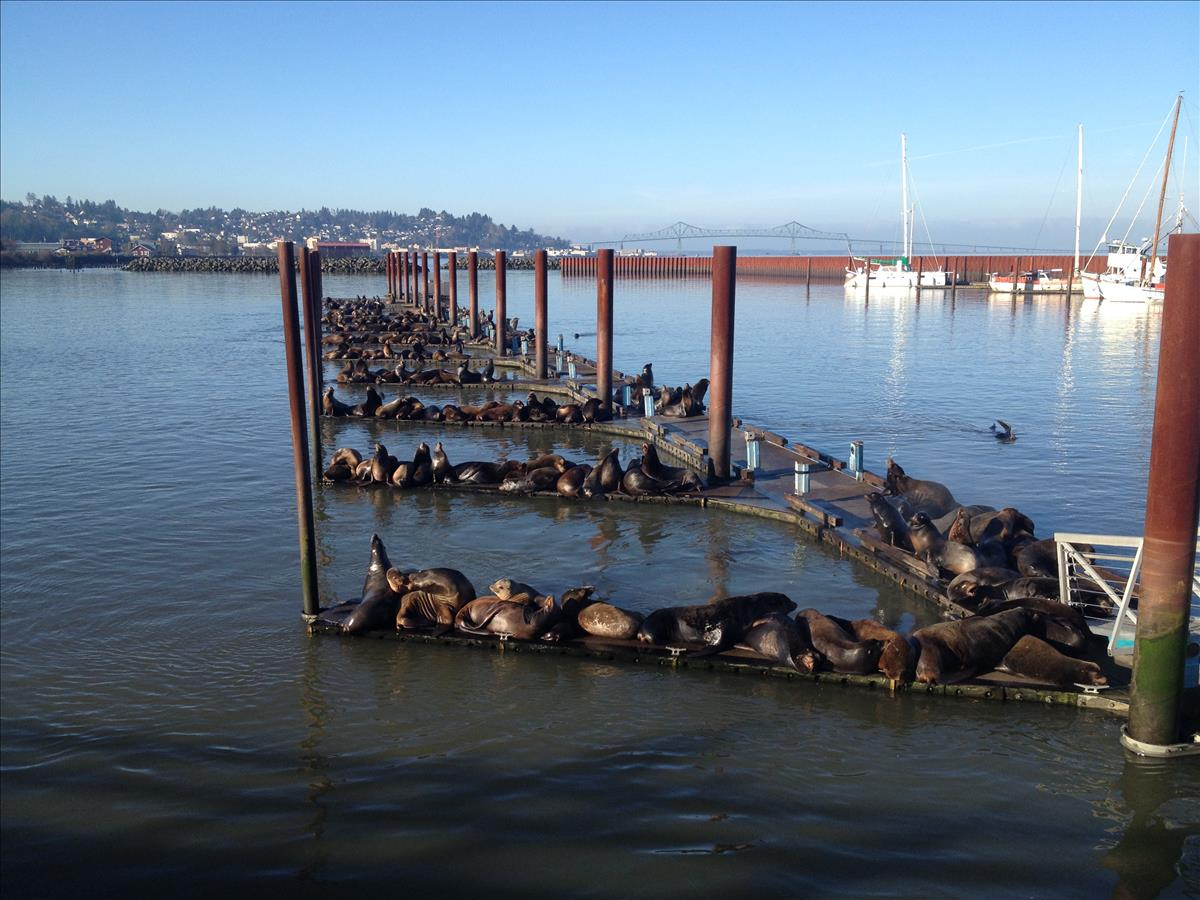 Sea lions at the East Basin