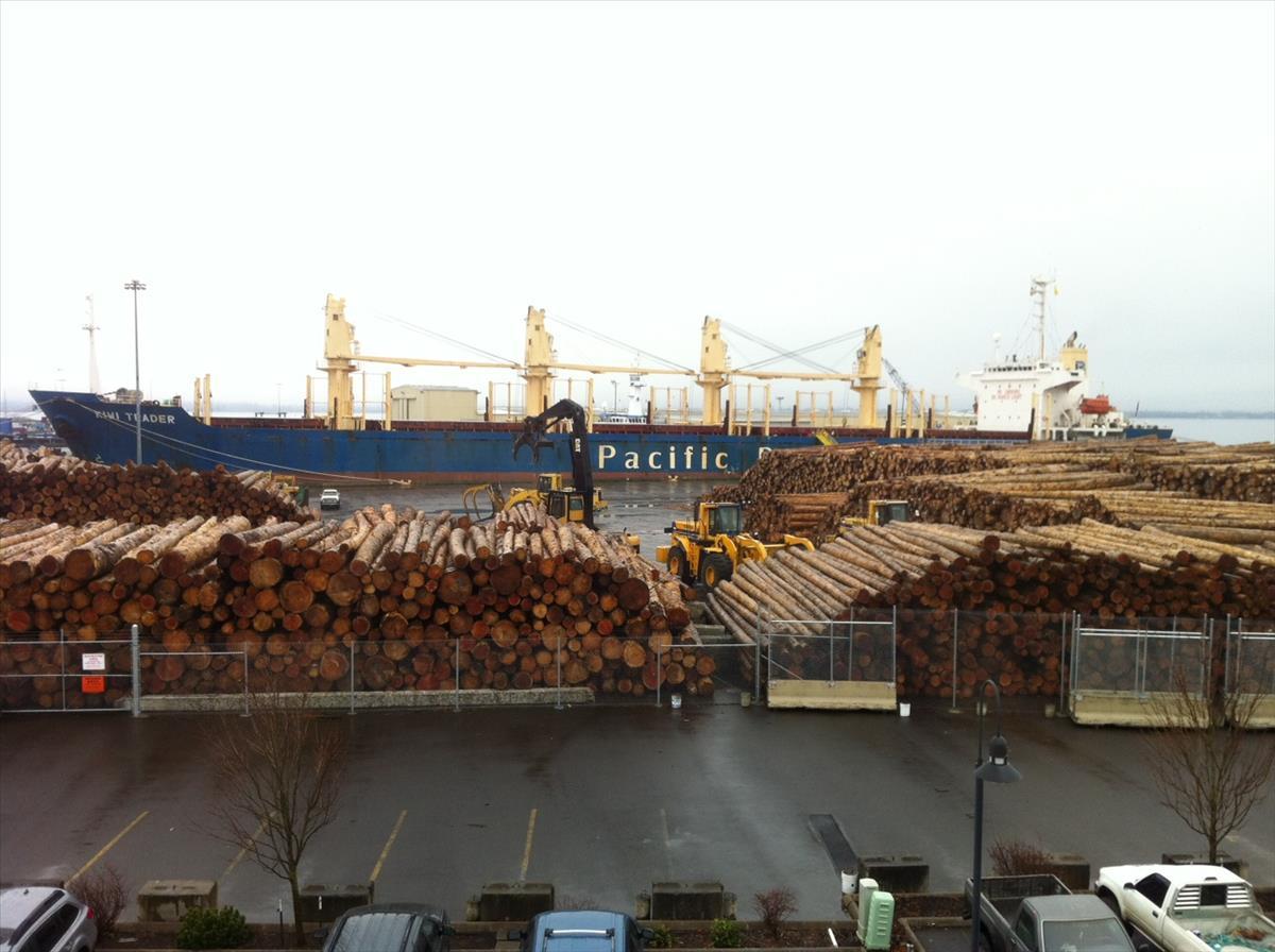 Kiwi Trader at Pier 1